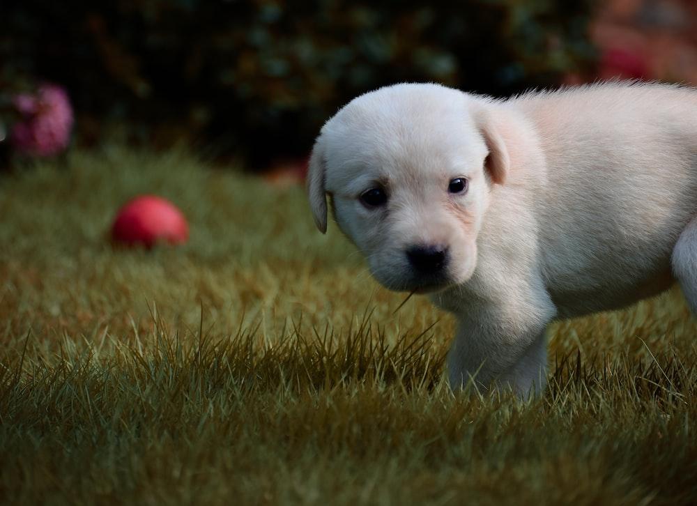 white puppy on green grass field