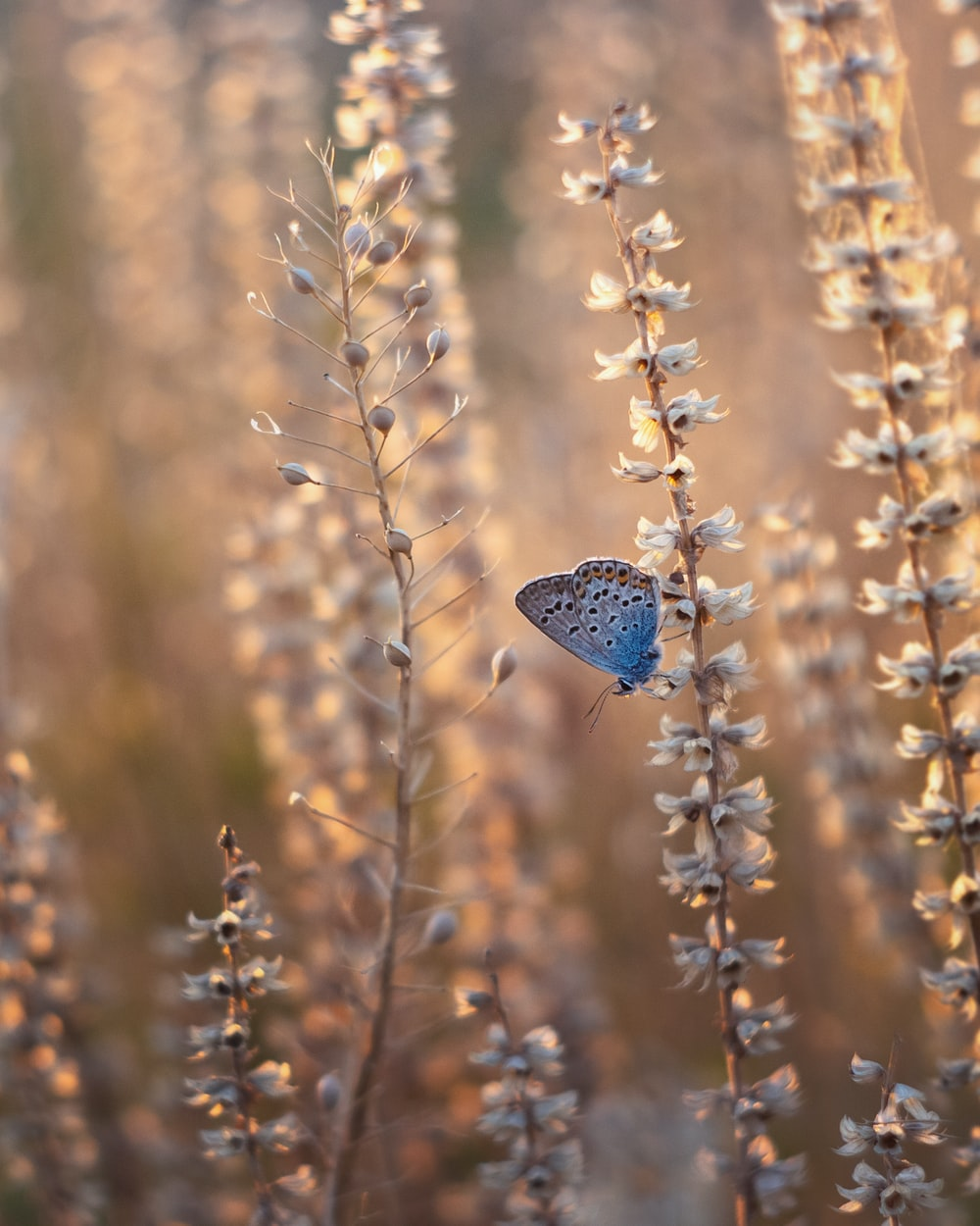 blue butterfly perched on brown plant during daytime