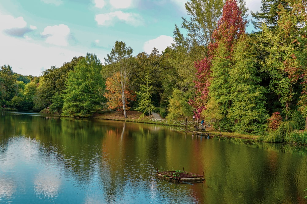 green and red trees beside river under blue sky during daytime