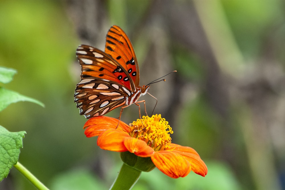 brown and black butterfly on yellow flower