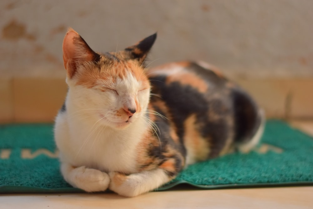 white brown and black cat lying on green textile