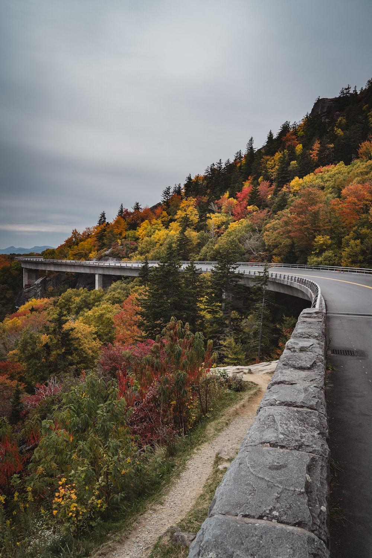 gray concrete bridge over river between trees