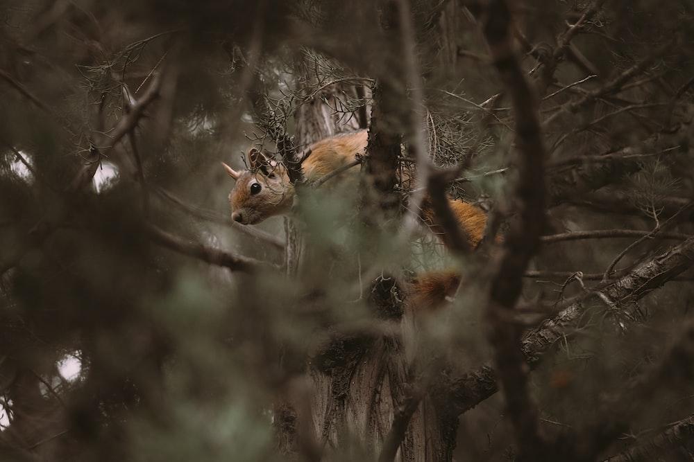 brown fox on gray tree branch