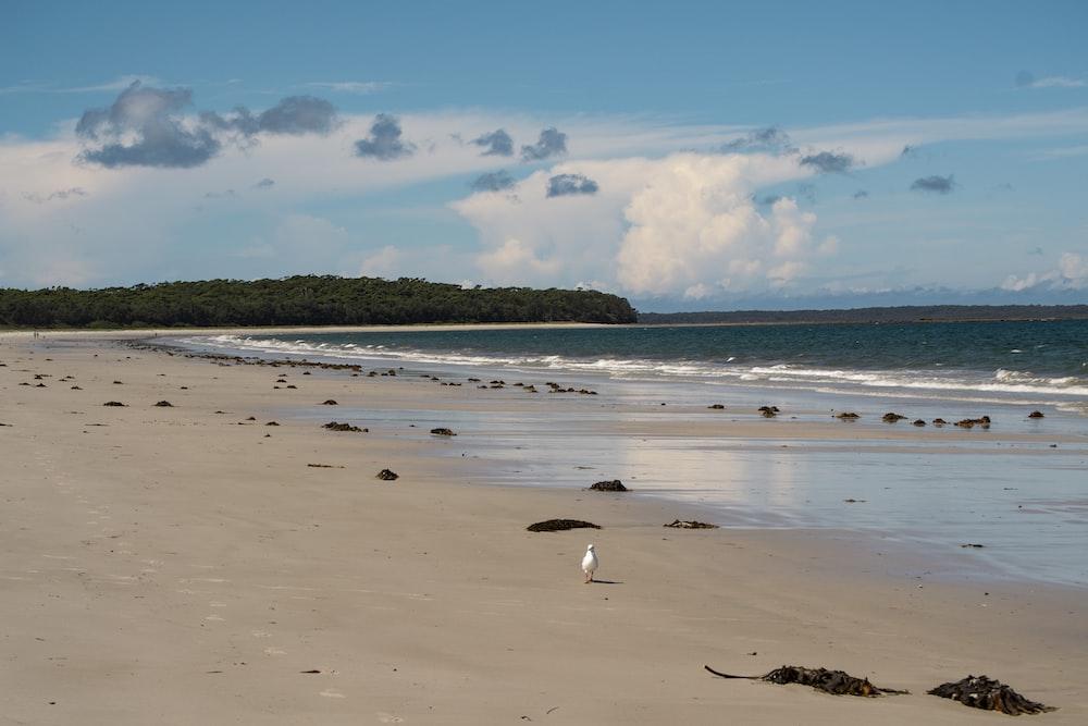 white bird on beach during daytime