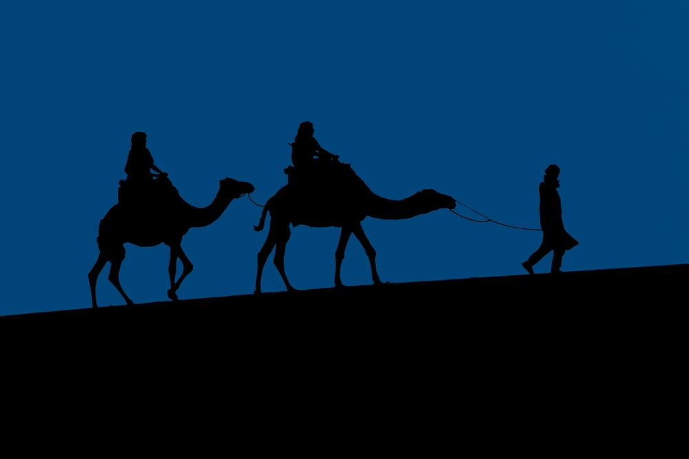 silhouette of people riding camel during daytime