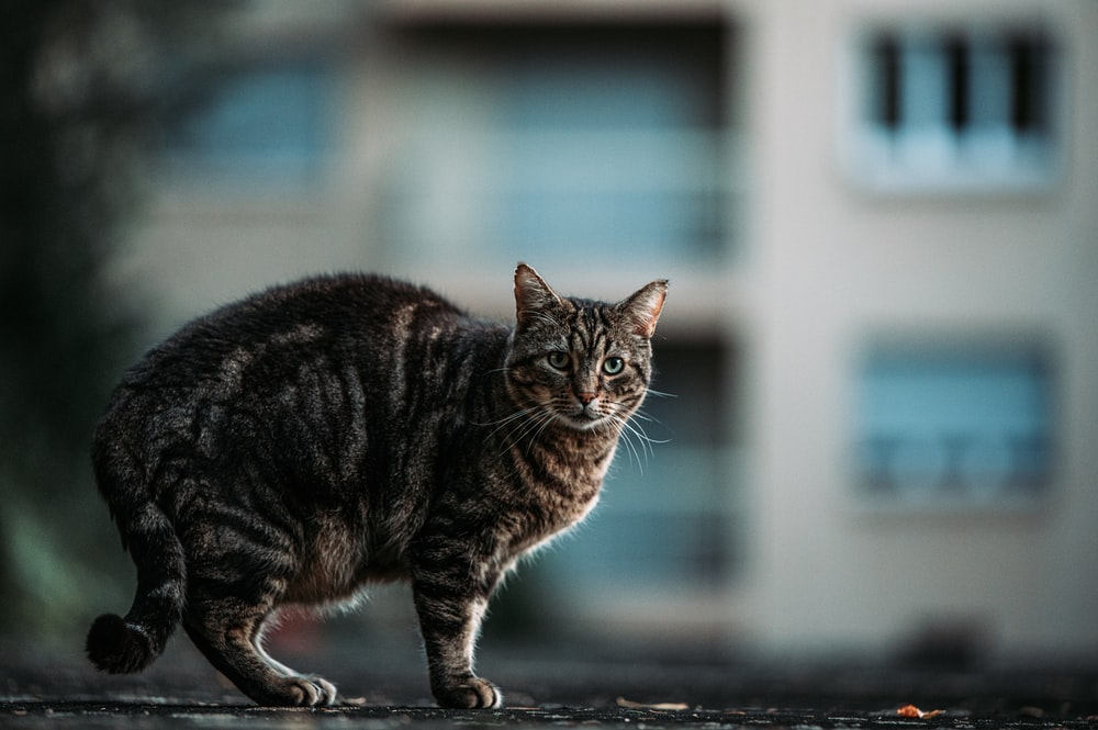 brown tabby cat on black concrete floor