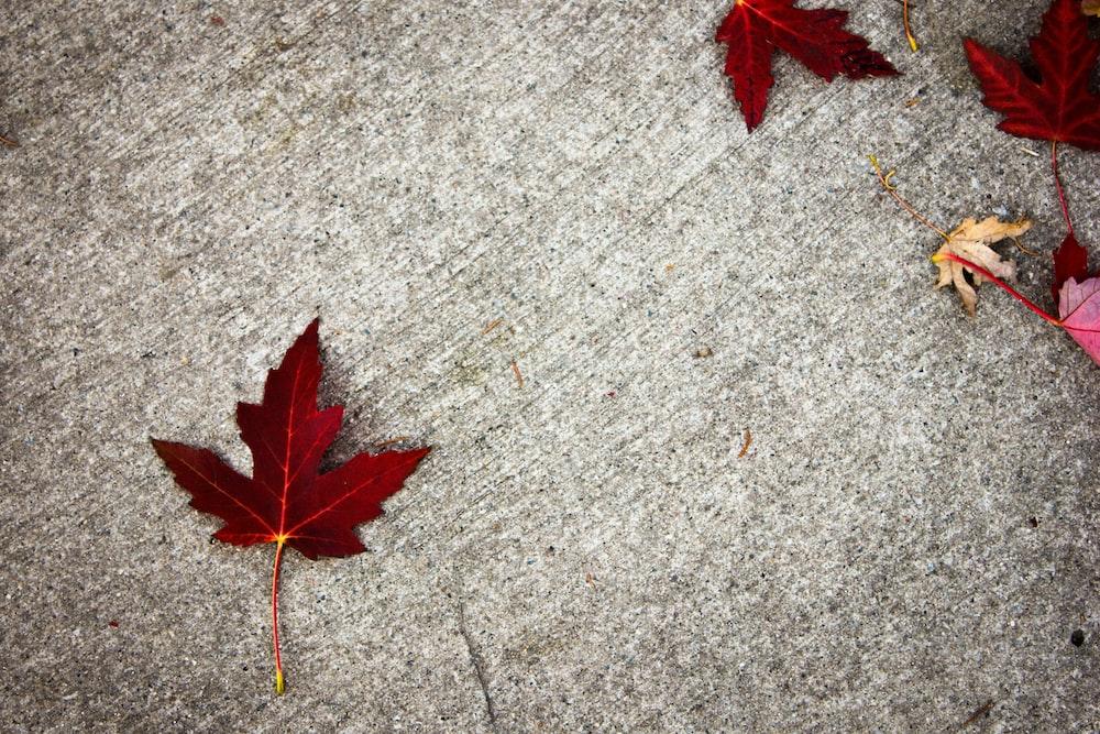 red maple leaf on gray concrete floor