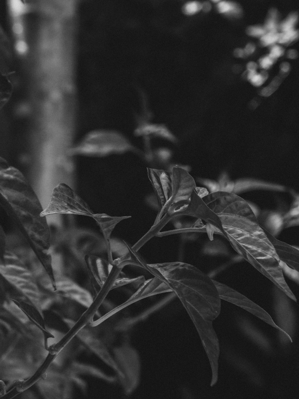 green leaves in grayscale photography