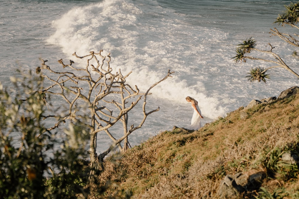 white bird on brown tree branch near body of water during daytime