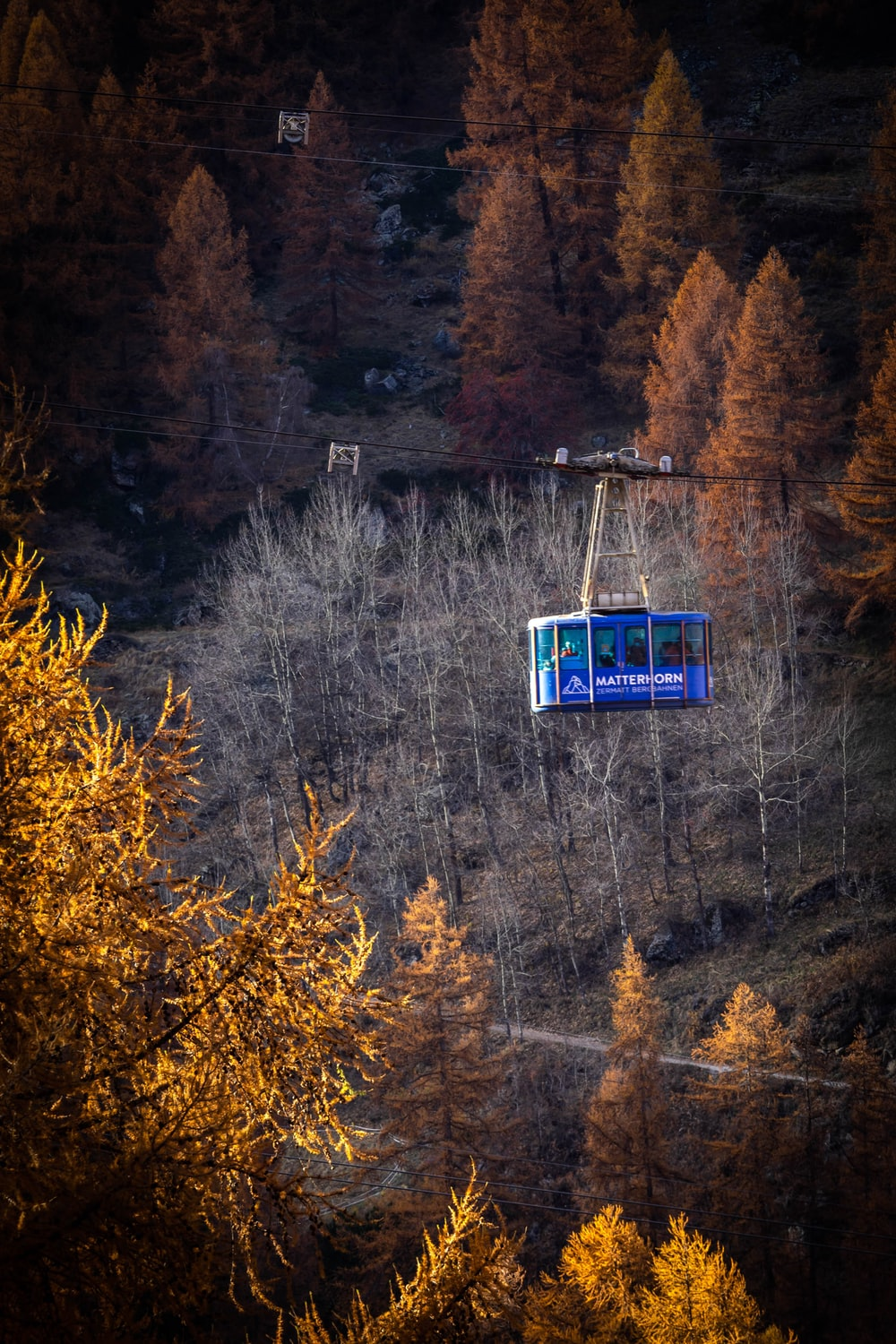 blue and white cable car over green trees during daytime