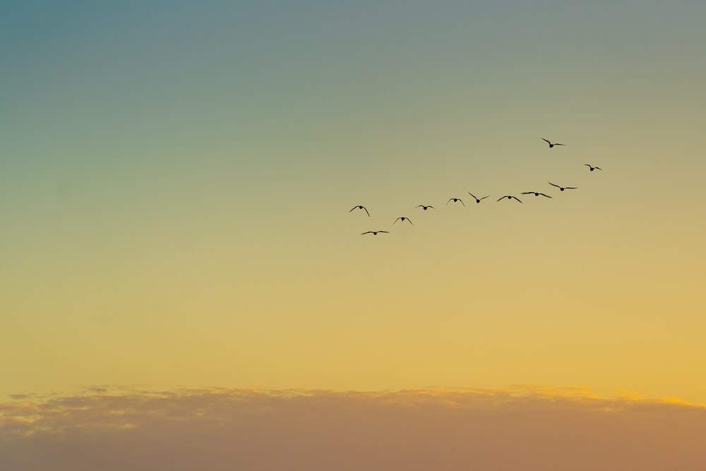 birds flying over the clouds during sunset
