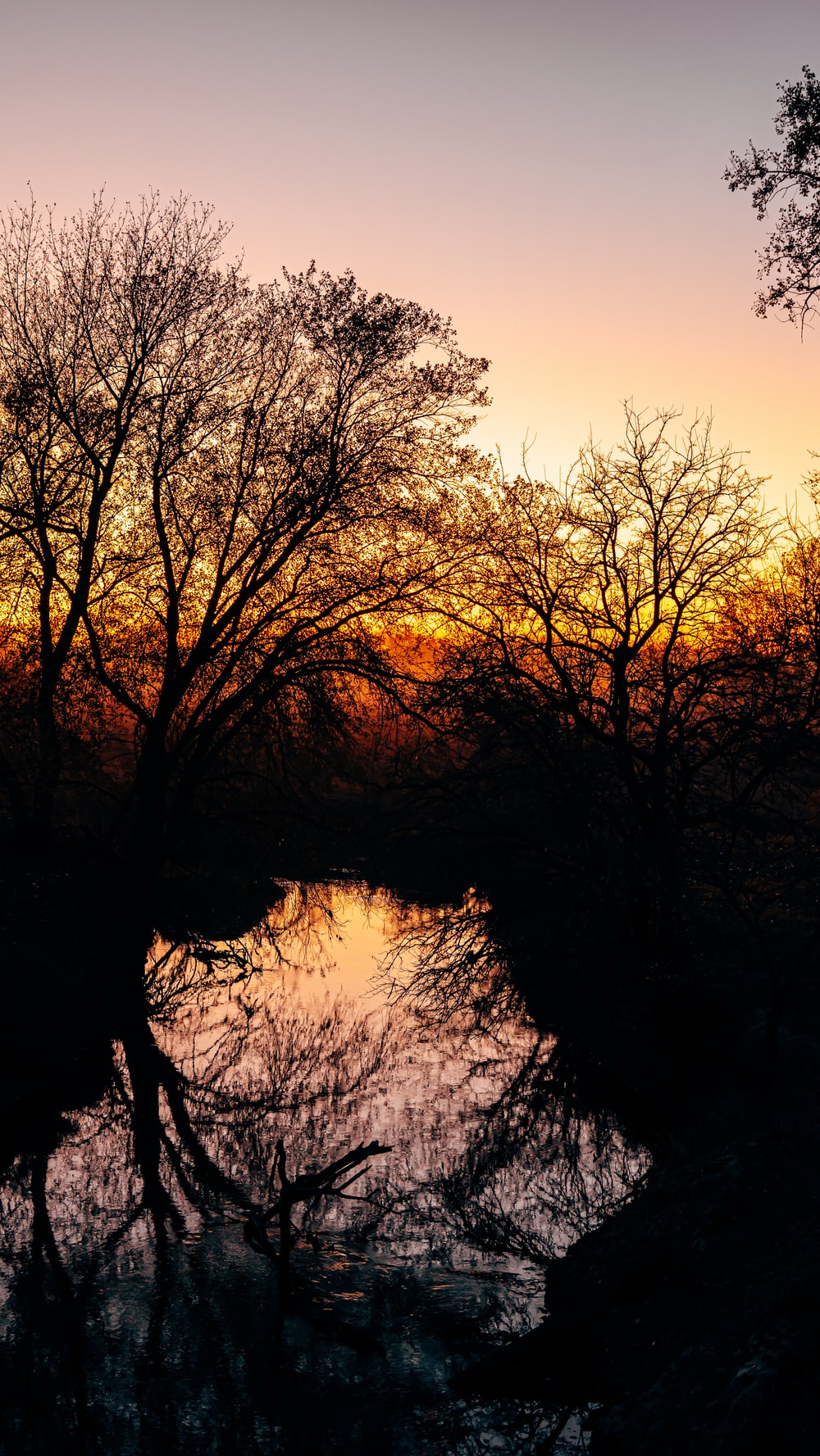 brown trees beside body of water during sunset
