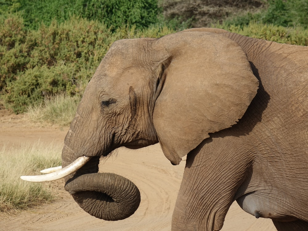 brown elephant on brown sand during daytime