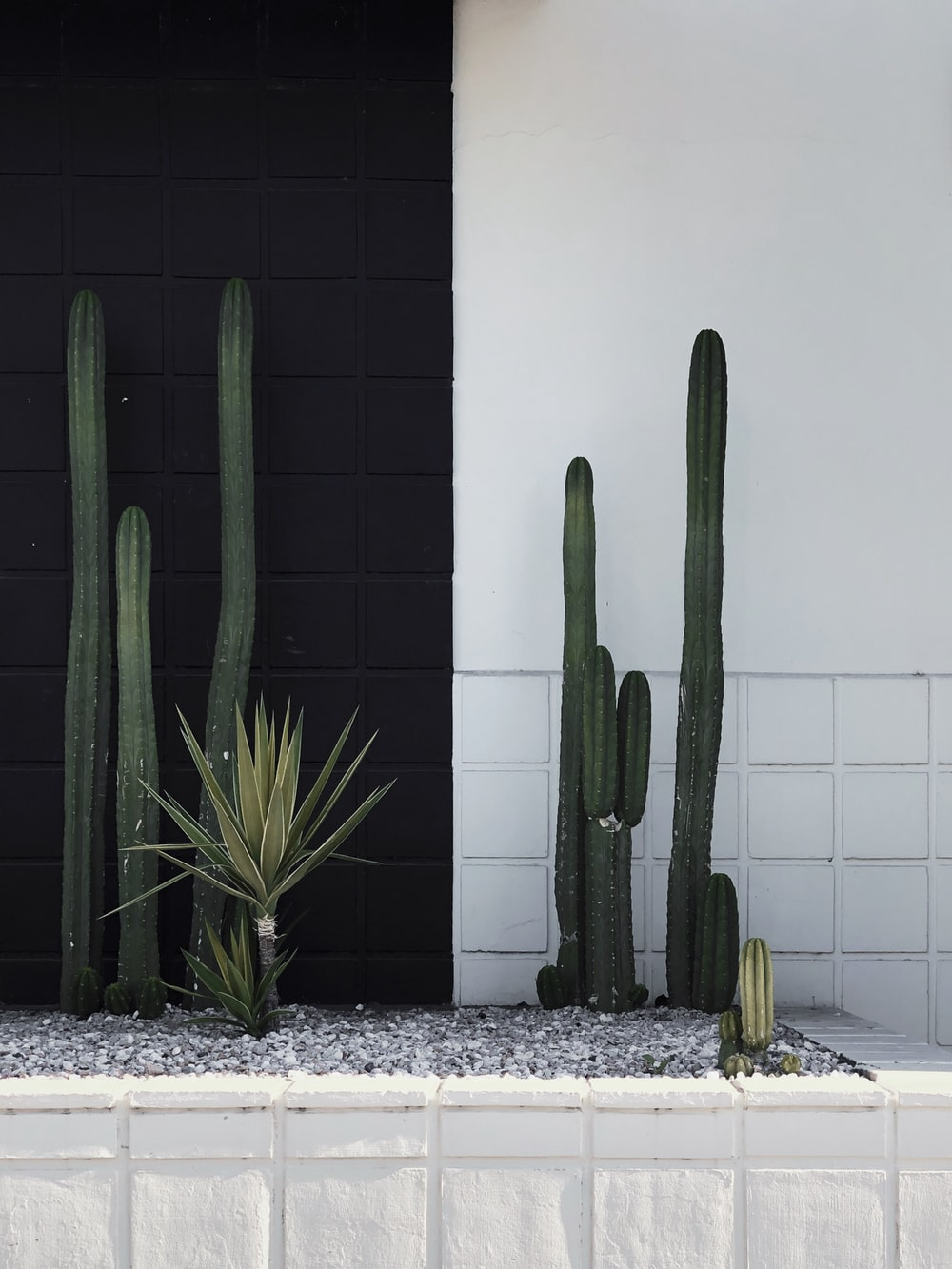 green cactus plant beside white wall