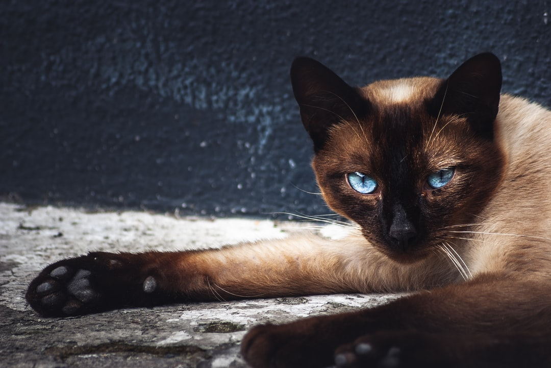Turquoise look. Cat resting in the Spanish sun.
