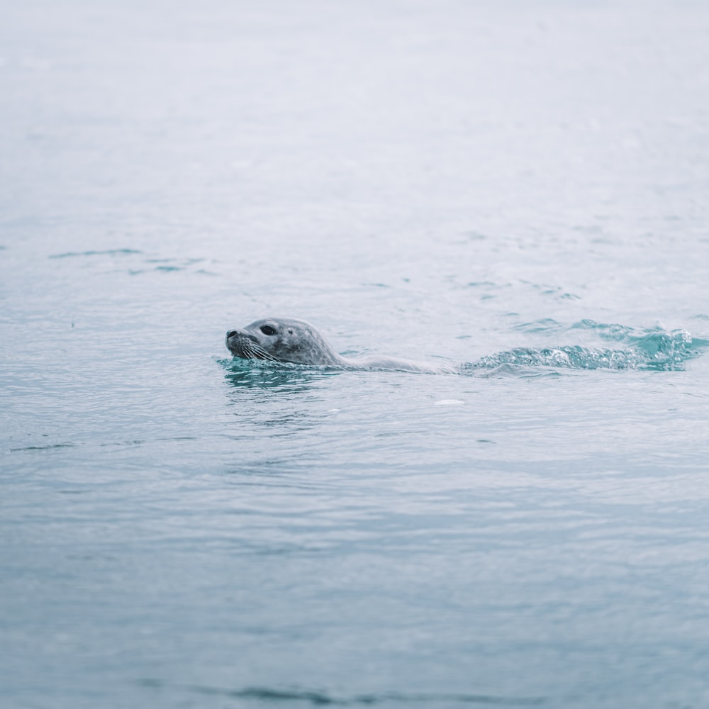 sea lion in water during daytime