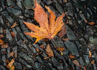 orange maple leaf on black stone