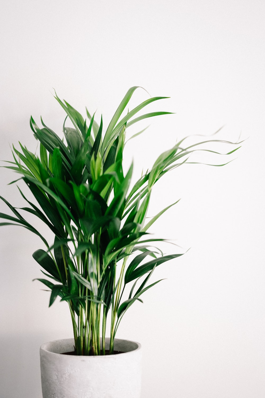 green plant on white background, houseplants