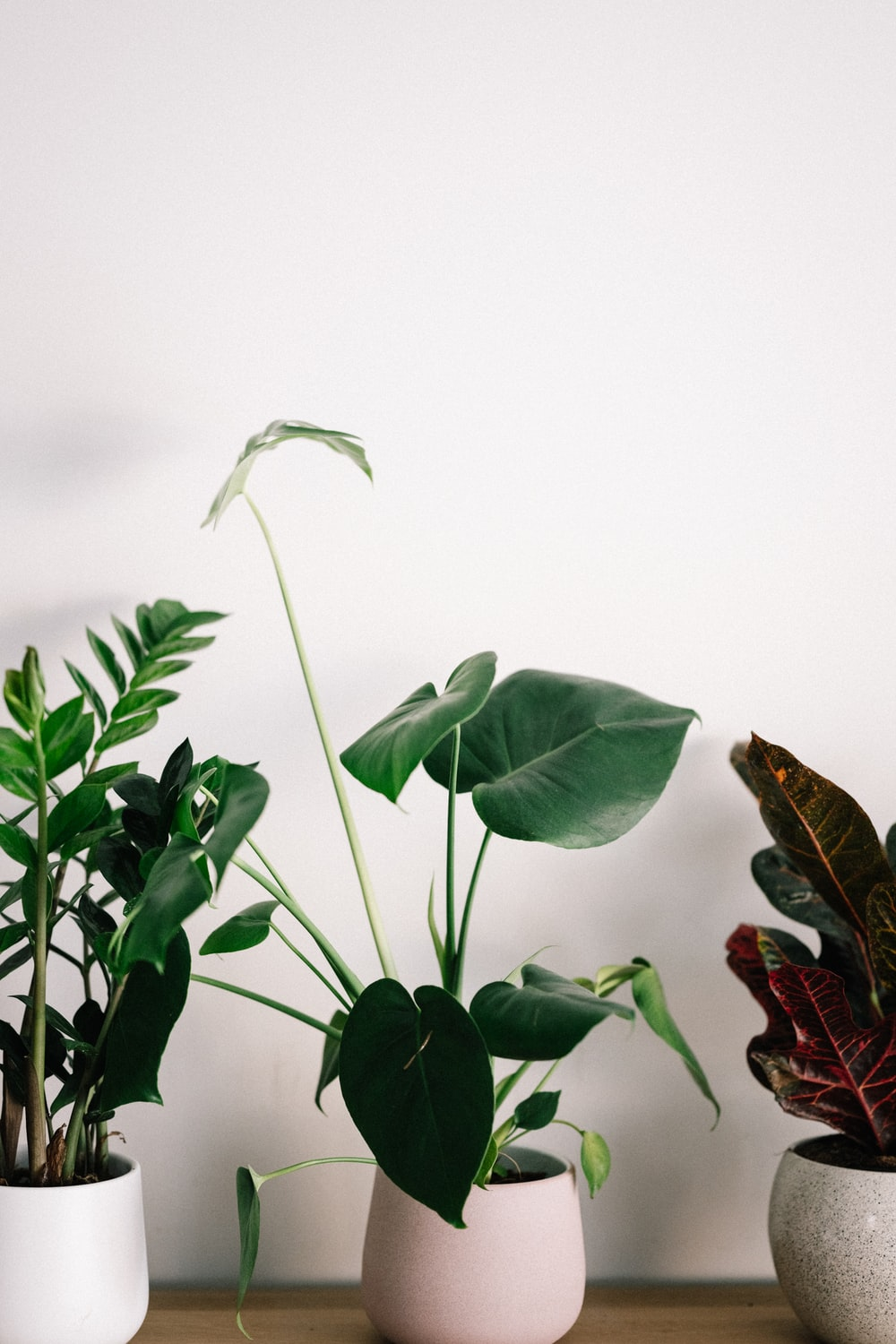 green plant with white background