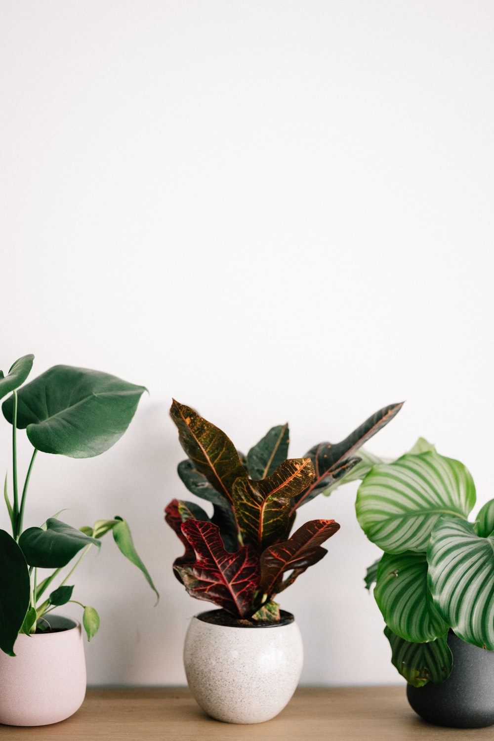 red and green leaves on white background, houseplants