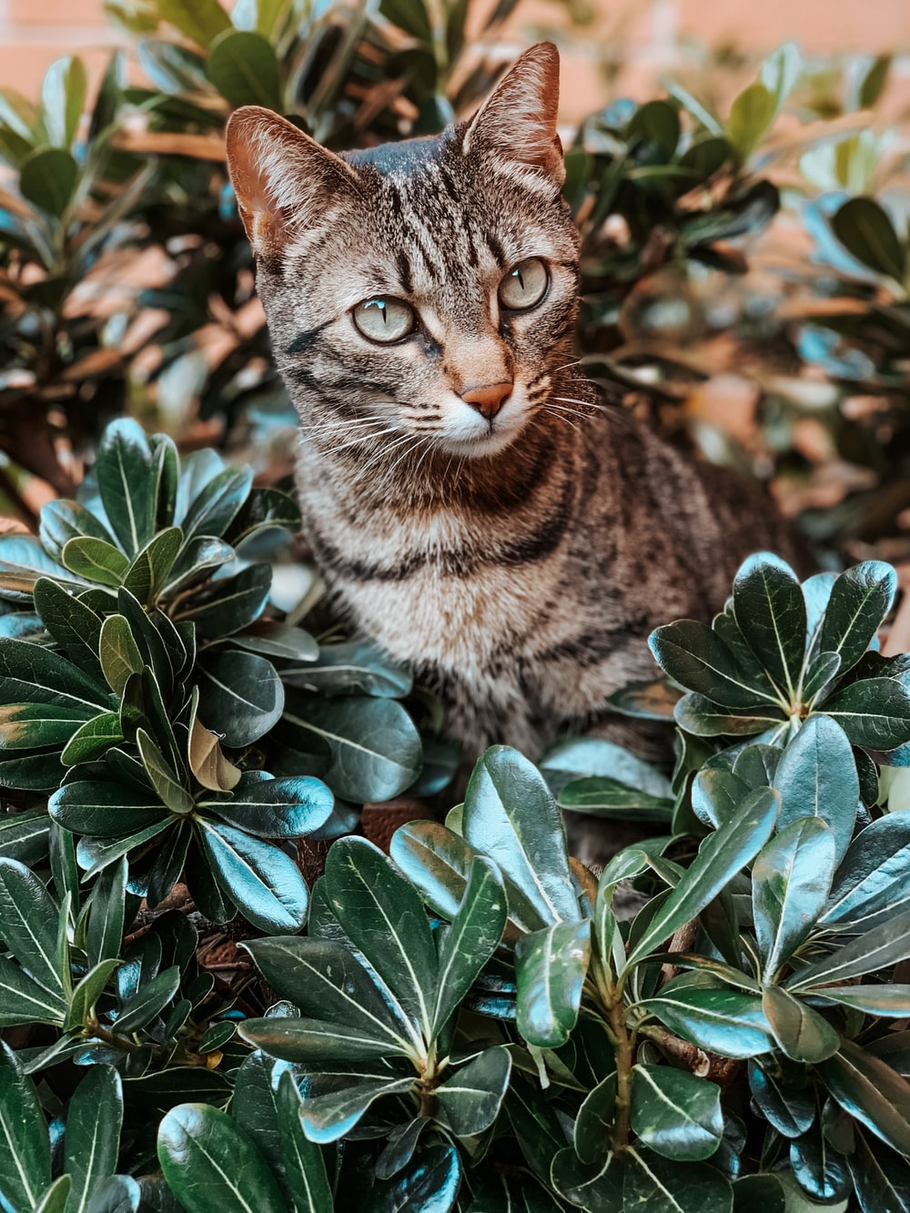 brown tabby cat on green plant