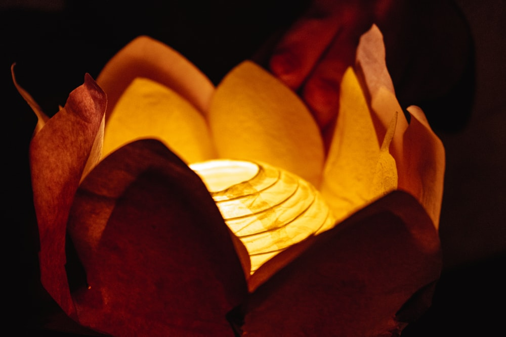 yellow and red flower petals