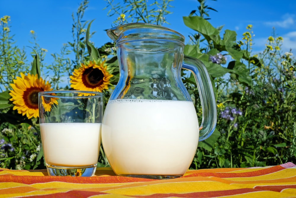 2 clear glass pitcher with milk