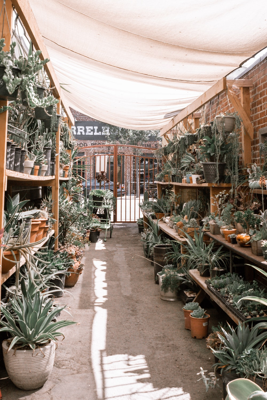 green plants on brown wooden shelf