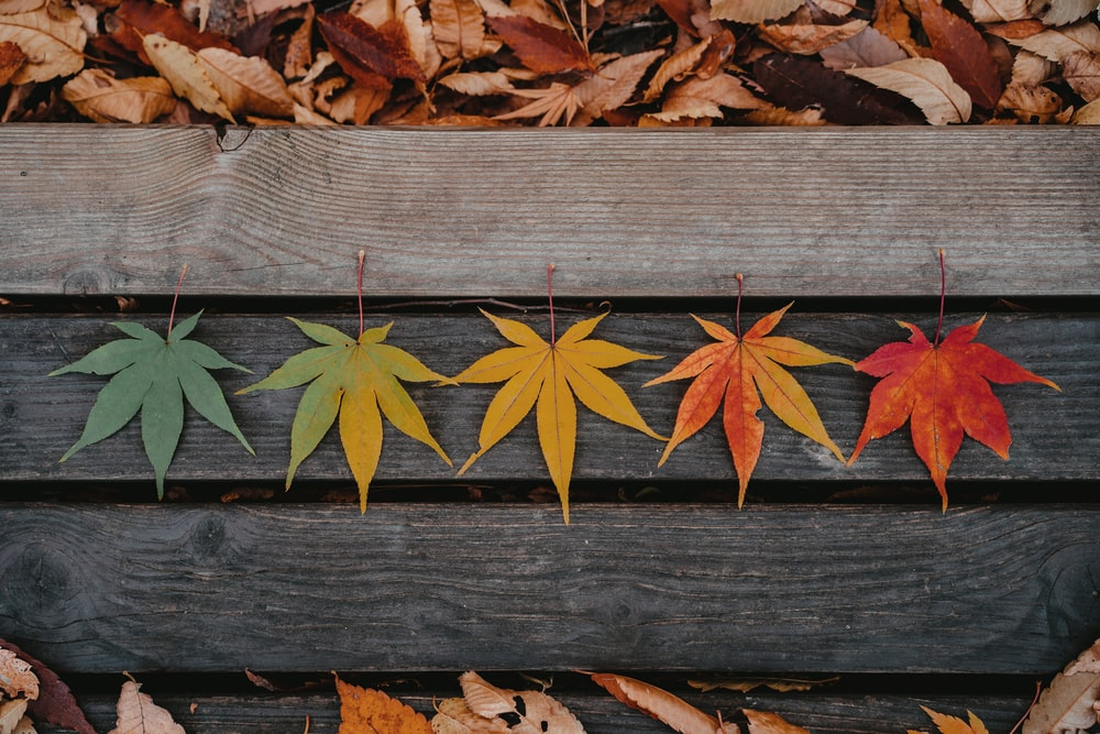brown leaves on brown wooden plank