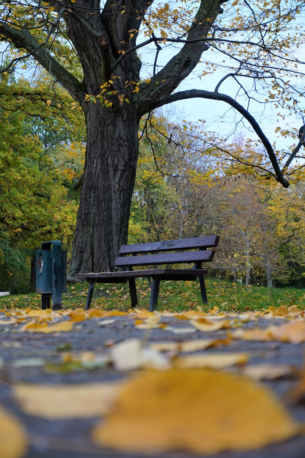 brown wooden bench under green trees during daytime