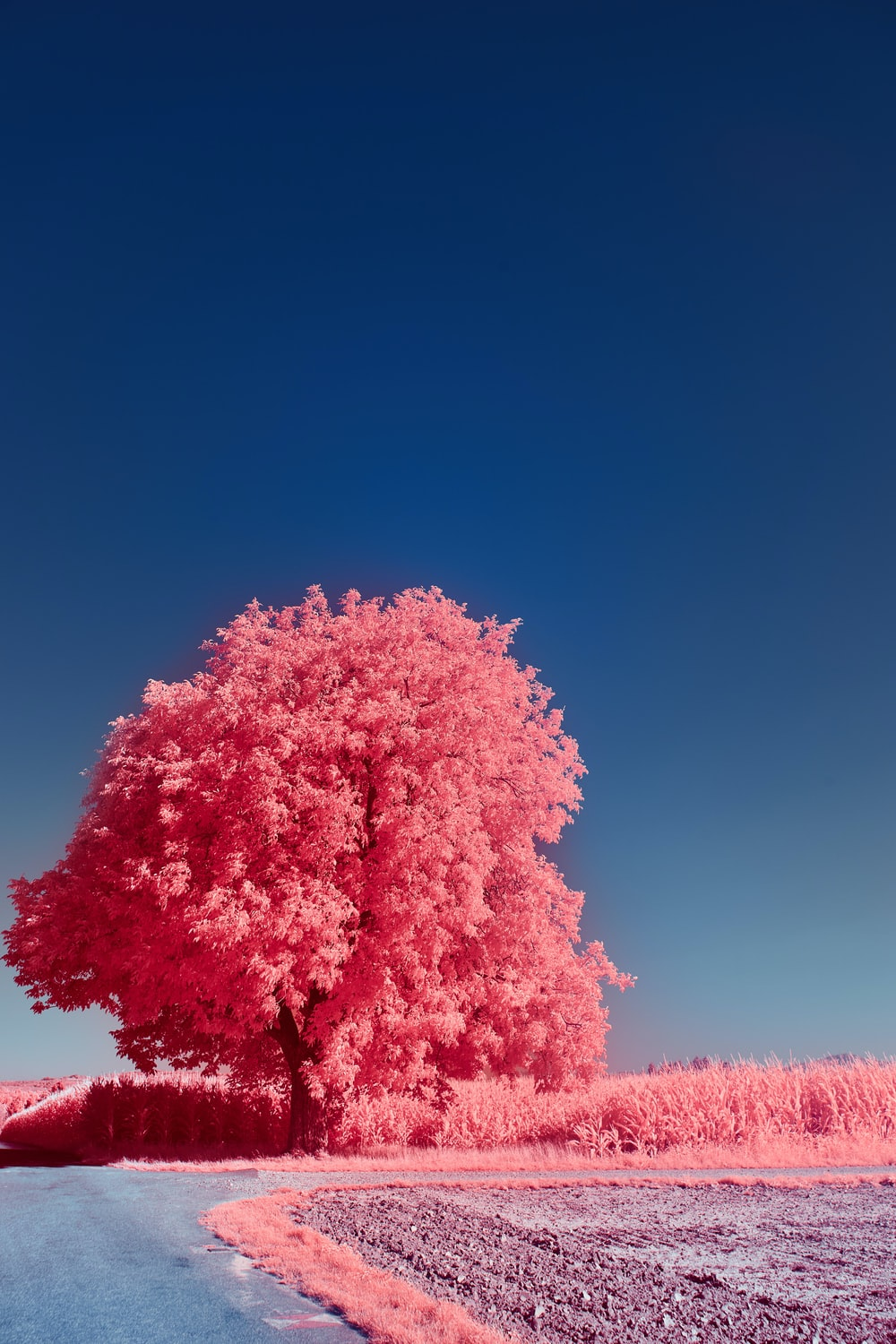 pink and white trees under blue sky during daytime