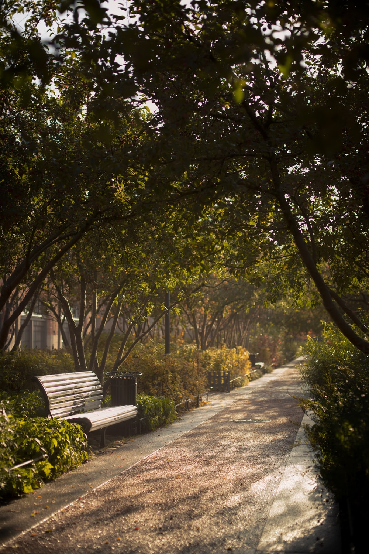 green trees beside gray concrete pathway