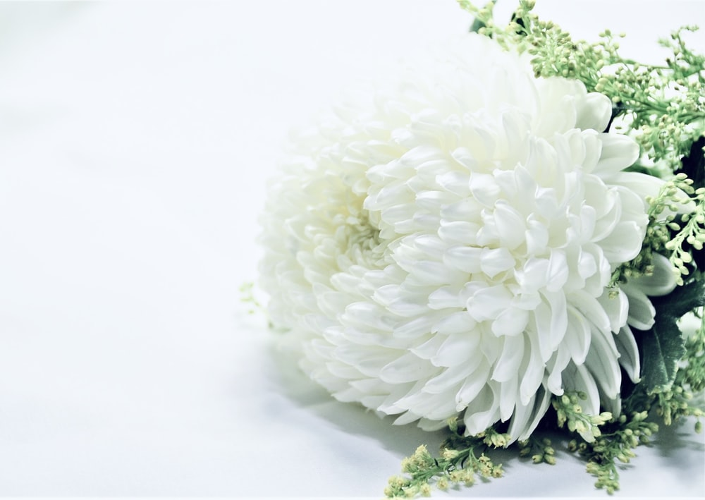 white flower bouquet on white surface