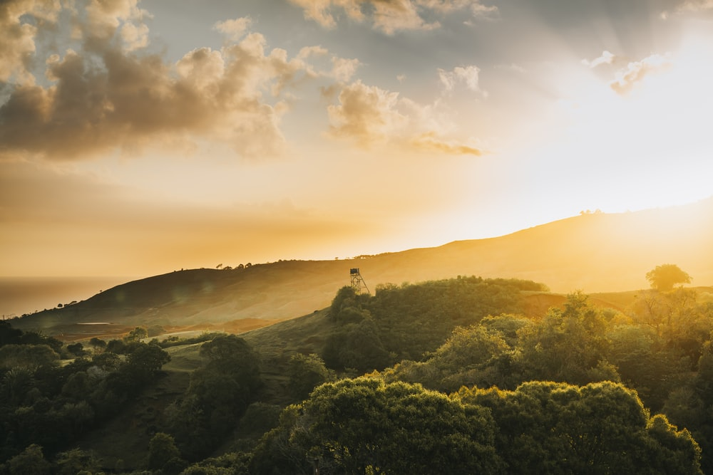 green trees on mountain during sunset