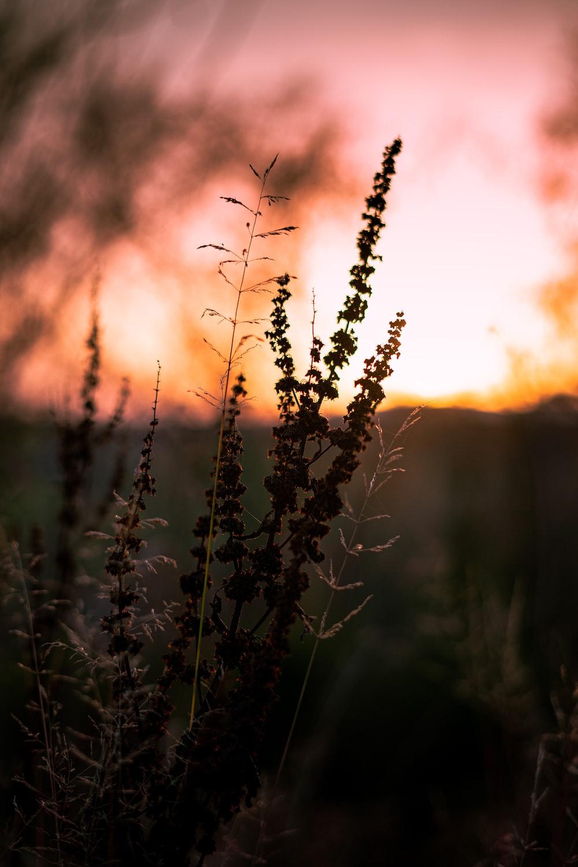 brown plant under orange sky