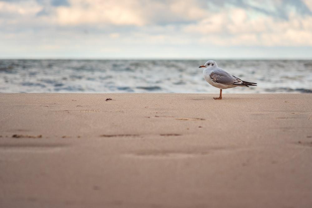 white and gray bird on beach shore during daytime