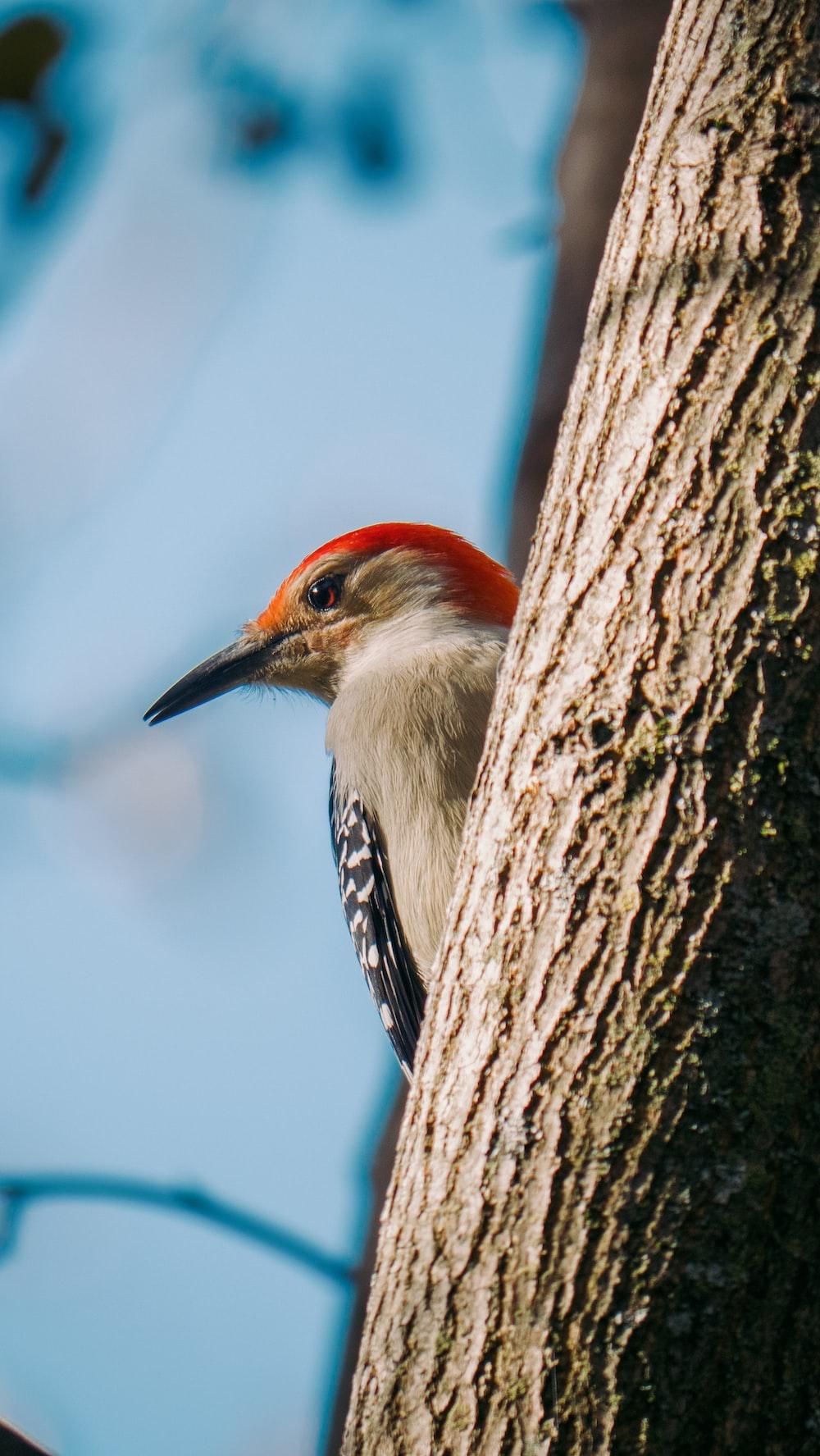 white black and orange bird on brown tree branch during daytime