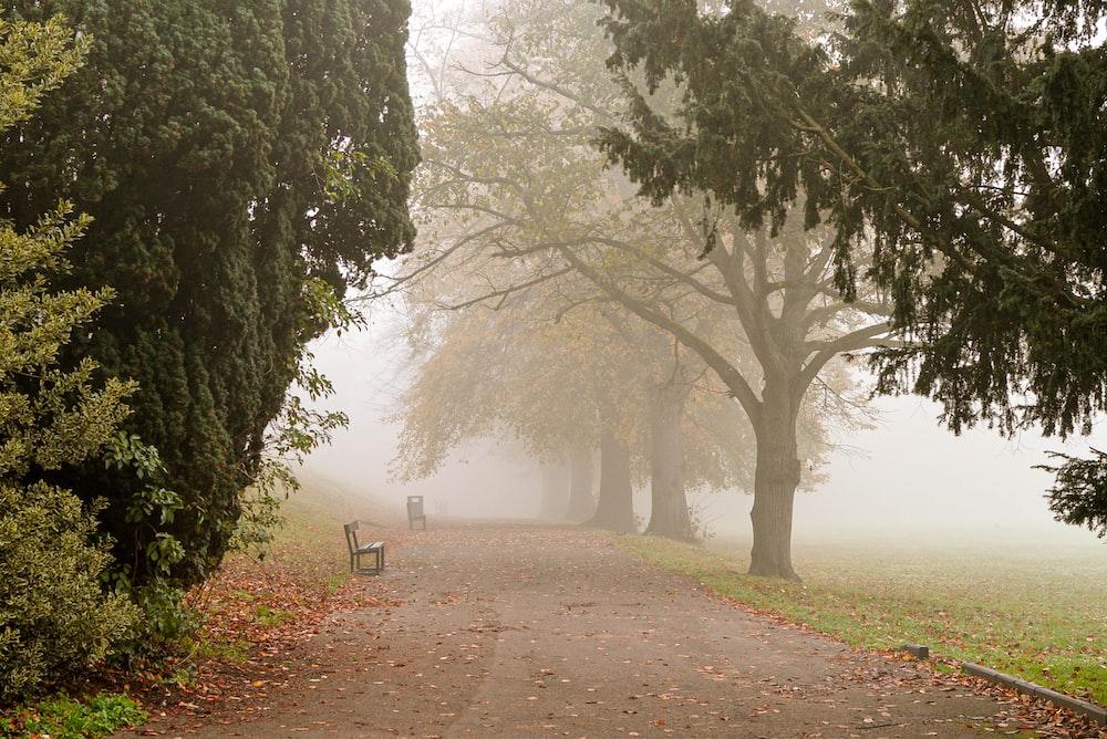 brown wooden bench under green leaf trees