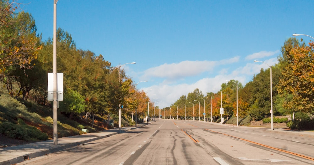 gray asphalt road between green trees under blue sky during daytime