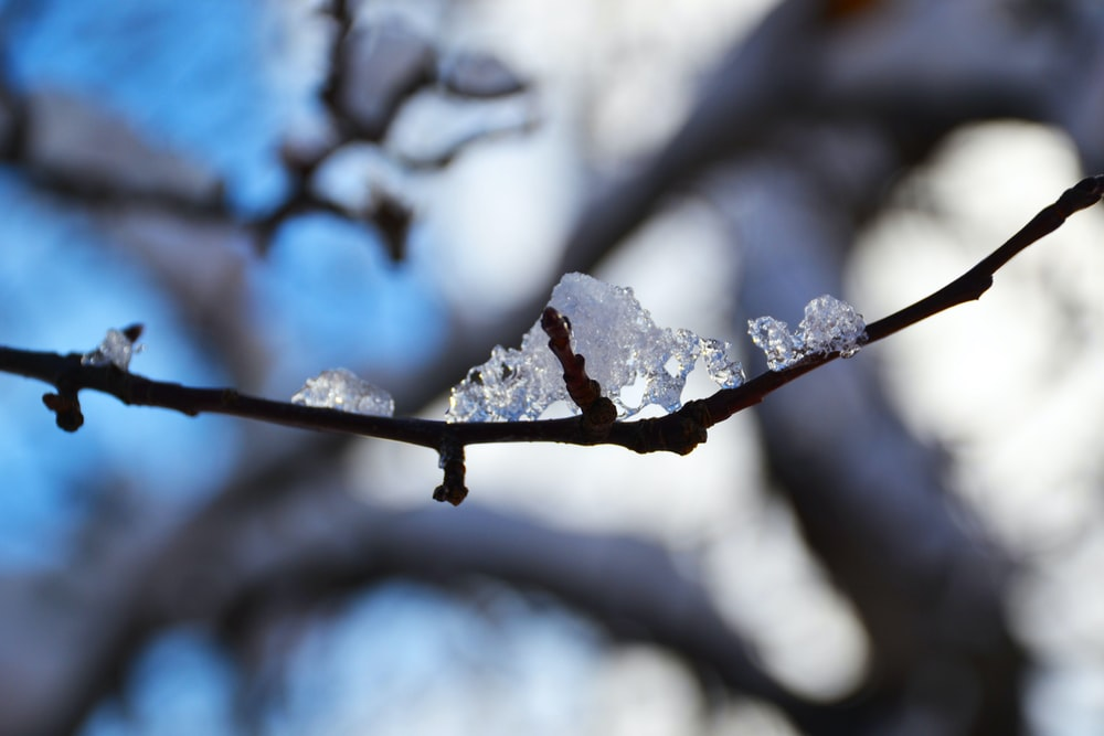 snow covered tree branch during daytime