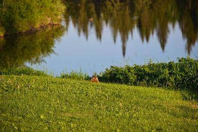 brown squirrel on green grass near lake during daytime groundhog teams background