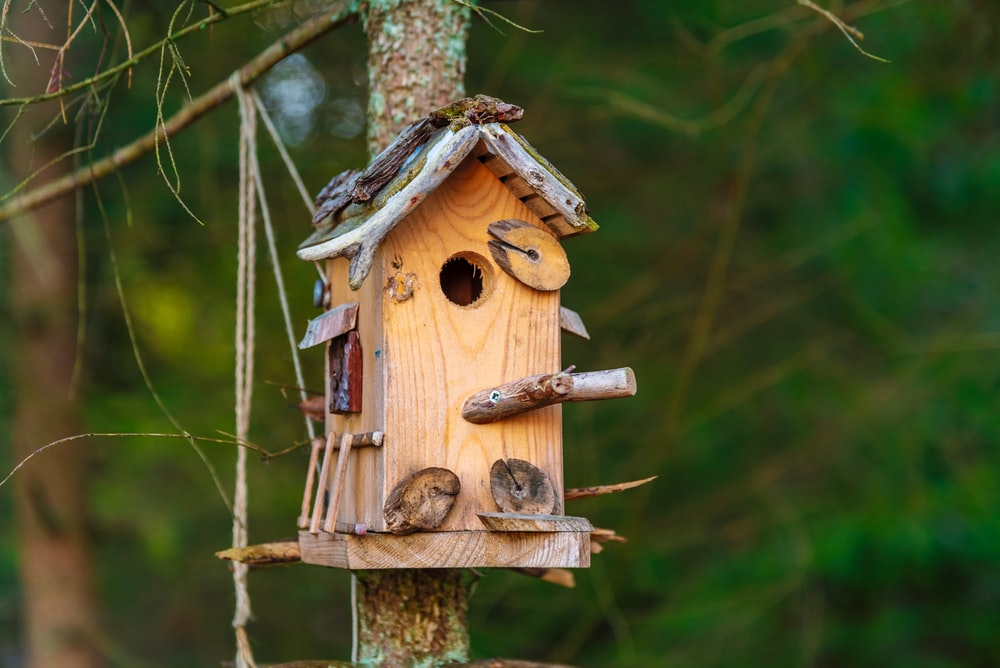 brown wooden bird house on brown tree branch