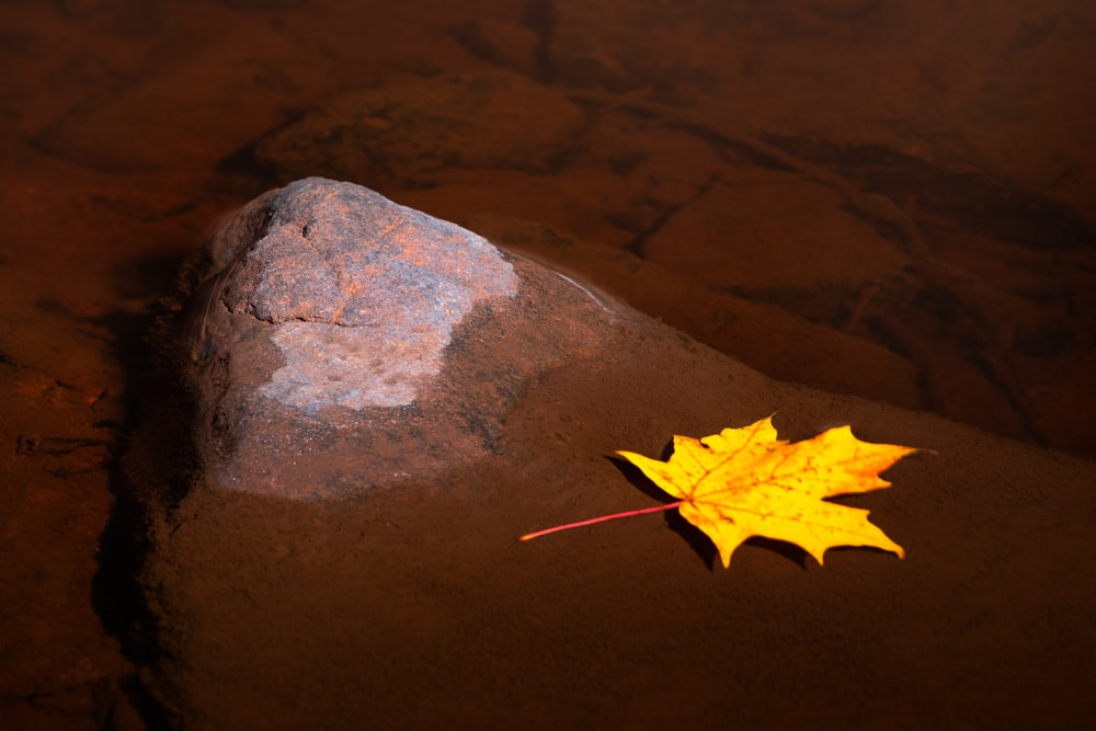 yellow maple leaf on gray rock