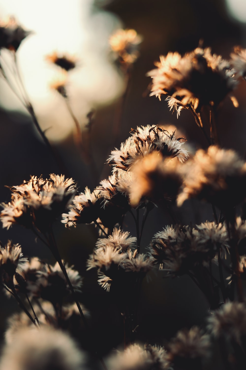grayscale photo of flowers during daytime