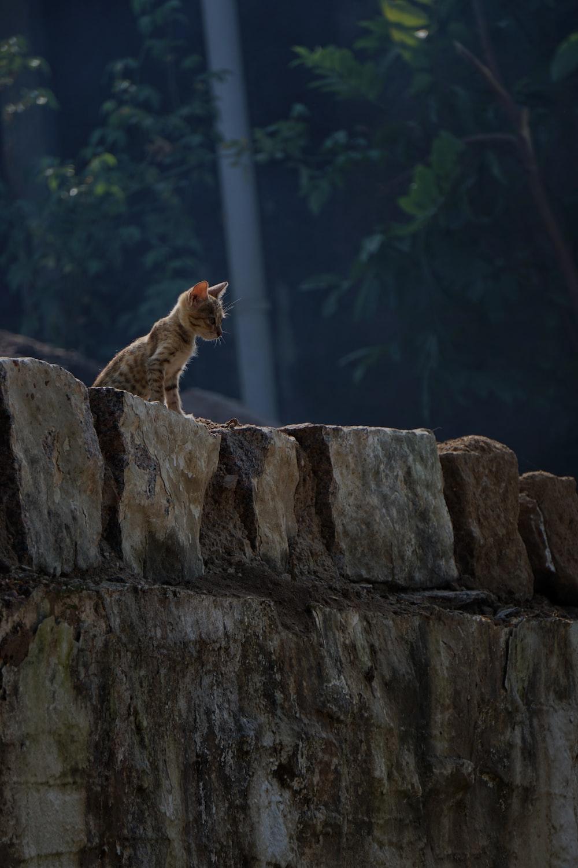 brown cat on brown rock