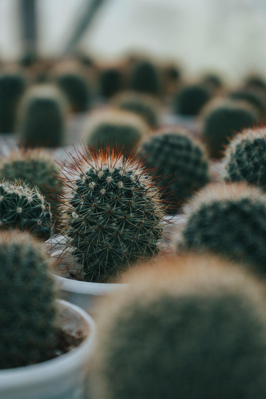 black and white cactus plant