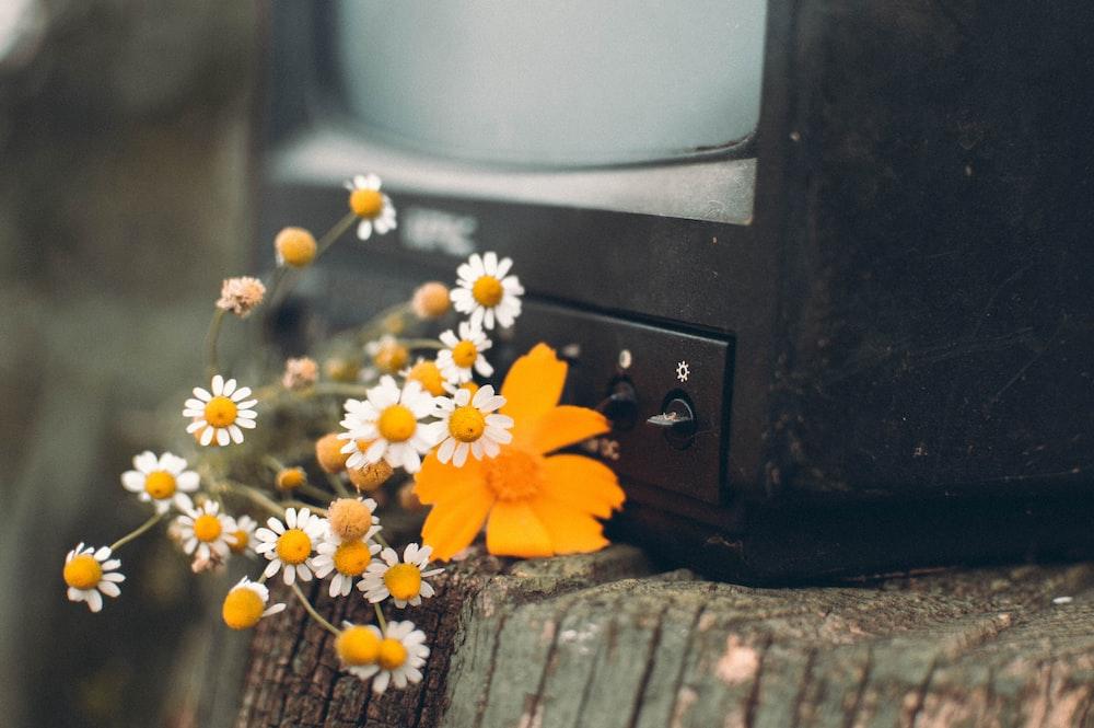 yellow flower on black crt tv