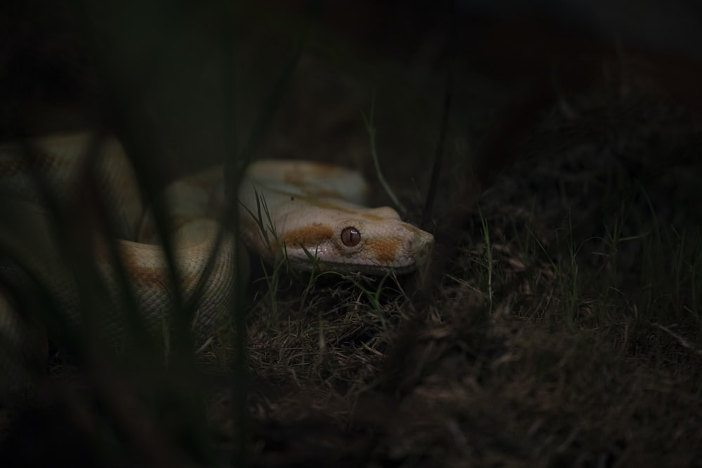 brown and white snake on ground