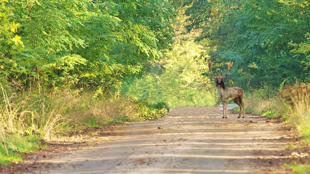 brown deer on gray concrete road during daytime
