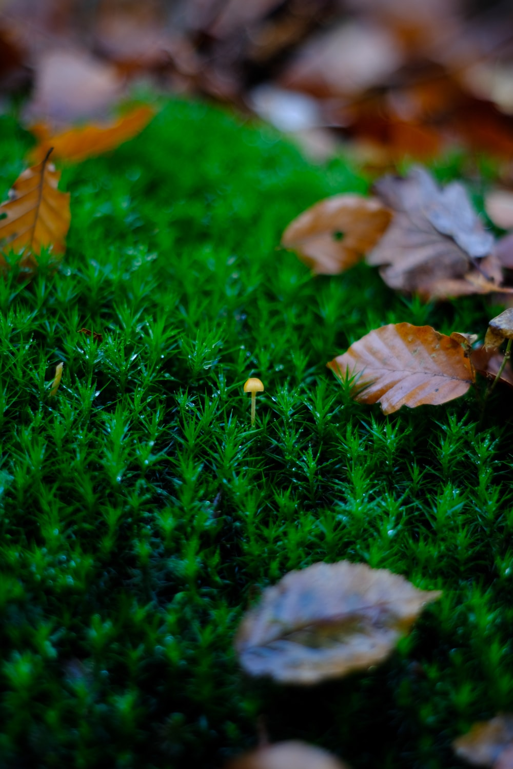 brown leaves on green grass